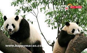 全民票選大熊貓名字