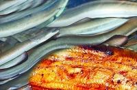 夏天多吃鰻魚有益