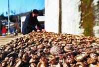 食用菌菇助防新冠肺炎