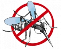 預防登革熱 消除伊蚊孳生源
