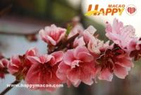 賞花好時節 桃花園裡桃花開