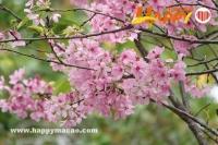 春天,我們去賞花(三)