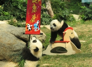 熊貓開心家族伴你共渡新春佳節