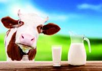 喝牛奶的弊端