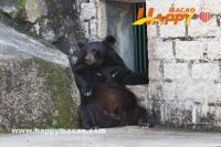 去二龍喉探大黑熊Bo Bo
