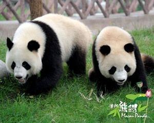 熊貓命名開開心心