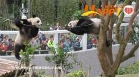 熊貓心心去世了