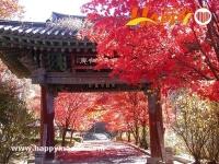 韓國紅葉開放預測2019 - 京畿道