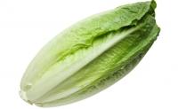 民署籲停食受大腸桿菌污染美國生菜