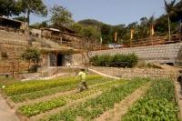 綠化心靈的金像農場