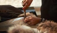 加拿大鵝明年底停用皮毛