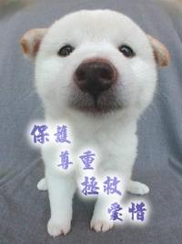 助養寵物計劃