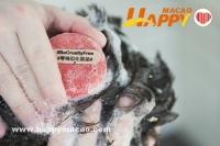 有愛洗髮皂  LUSH零殘忍化妝品運動