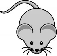 被老鼠咬傷怎麼辦?