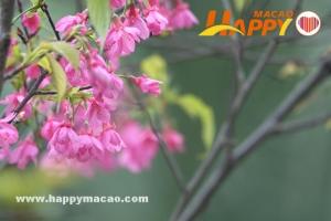 春天,我們去賞花( 一)