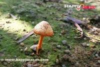 勿亂採食野生蘑菇