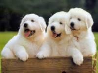 台灣遊注意防範狂犬病