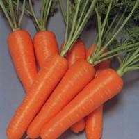 胡蘿蔔吃多了小心不孕