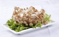 食用菌的營養價值