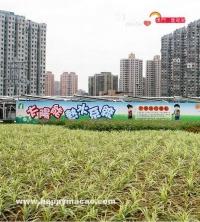 生態綠天台 親近綠色生活