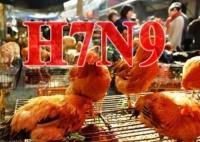 本澳確診1例輸入性感染禽流感個案