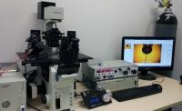 澳大科研突破  增注射後細胞存活率