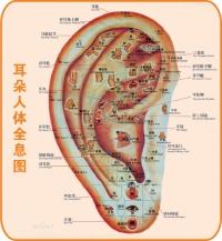 齊來認識耳穴療法