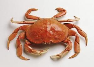 吃螃蟹的搭配和需注意的問題