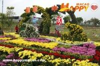350畝小欖菊花會