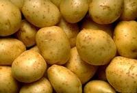 馬鈴薯也是健康水果