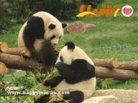 石排灣大熊貓館對面年底動工建小熊貓館
